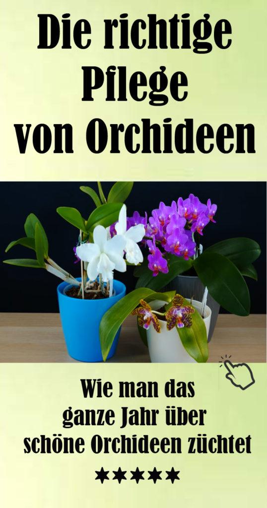 Wie man Orchideen richtig pflegt